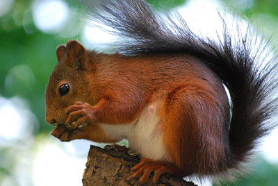 why-do-squirrels-lick-leaves-fishnet-stockings-sexy